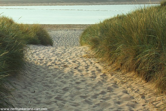 Path through the dunes to the beach.