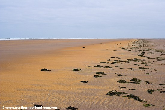 Near the low tide mark the sands turn to a vivid orange colour.